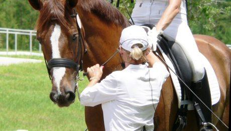 Sajátítsa el a lovas sportág technikáit sportoktató vagy sportedző képzésen!